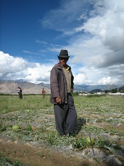 Tibet Man  (lamlamlam) Tags: china travel portrait man tibet tibetan