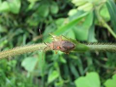IMG_1427 (kobayan54) Tags: 虫