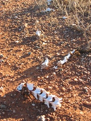 somewhere in the outback (kamikadse) Tags: soil bones erde knochen reddirt kamikadse theunforgettablepictures