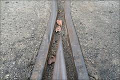 阿里山森林鐵路06