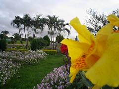 flores Nilceia Gazzola 25 (nilgazzola) Tags: brasil de foto sp fotos ou com nil minhas tirada maquina echapora gazzola nilgazzola
