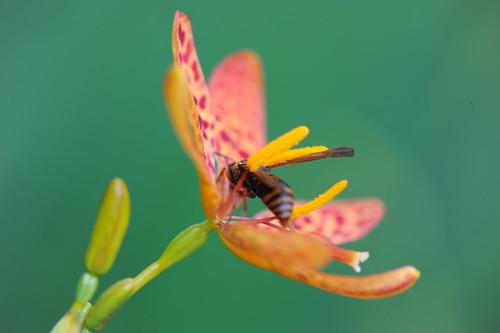 螳螂捕蝶 046