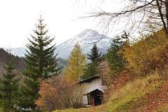 Küttepuud (anuwintschalek) Tags: autumn mountain berg landscape austria evening abend october herbst autumncolours valley firewood niederösterreich org puuriit 2010 annaberg sügis ötscher holzstapel herbstfarben õhtu 18200vr mägi nikond90 küttepuud sügisvärvid