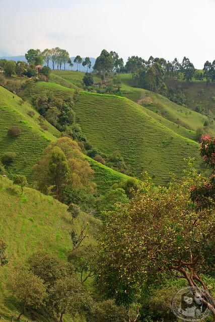 Lush Hills Of Salento