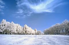 In Taiwan Nantou .    Taiwan Adventist College  IR    DSC_0306 (Ming - chun ( very busy )) Tags: wallpaper sky tree landscape ir nikon d70 d70s taiwan  infrared  infravermelho nantou  r72 infrarot  infrarrojos    infrapuna infrarood infrarouge   infrarossi      inframerah   infravrs  infraerven