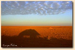 bus shadow (Carpe Feline) Tags: africa travel shadow bus sahara northafrica sihouette libya 5photosaday theloveshack wowiekazowie carpefeline excapture photographersgonewild