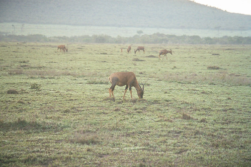 SW Sweetwaters Antelopes