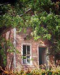 one abandoned after another (McMorr) Tags: old family house abandoned home overgrown farmhouse rural farm country neglected eerie spooky forgotten weathered disused homestead discarded forsaken desolate deserted abused fallingapart 4star creativenonfiction diamondclassphotographer mcmorr
