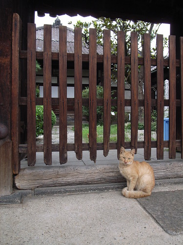 Cat in front of the temple gate