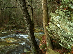S5000982 (Force Majeure Studios) Tags: road park mountain mountains art nature creek river photography little outdoor cove tennessee pigeon fine wear national valley lane gatlinburg smoky forge sparks laurel sinks cades the jameswbailey