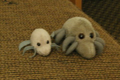Two sizes of Dust Mite in our hotel in Carlsbad, Ca