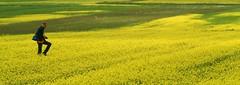 The photographer and the meadow - by Un ragazzo chiamato Bi