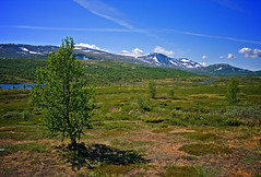 Fra / From Dovre (Krogen) Tags: nature norway landscape norge natur dovre norwegen olympus c7070 noruega scandinavia krogen dovrefjell landskap noorwegen noreg skandinavia oppland