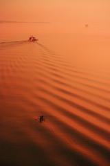 Dessert in the sea. - by nick kulas