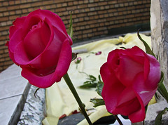 Flowers on the grave of Tuan Guru