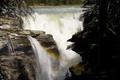 Athabasca Falls (melmark44) Tags: canada river waterfall rainbow glacier alberta athabascariver jaspernationalpark athabascafalls athabasca rockflour glacialriver melmarkowitz