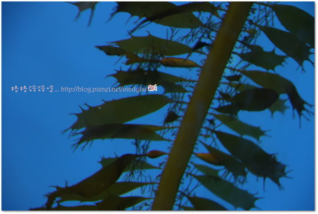 Kenting_2007_0915_111929