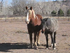 "horseys • <a style=""font-size:0.8em;"" href=""http://www.flickr.com/photos/16333811@N00/2372852590/"" target=""_blank"">View on Flickr</a>"