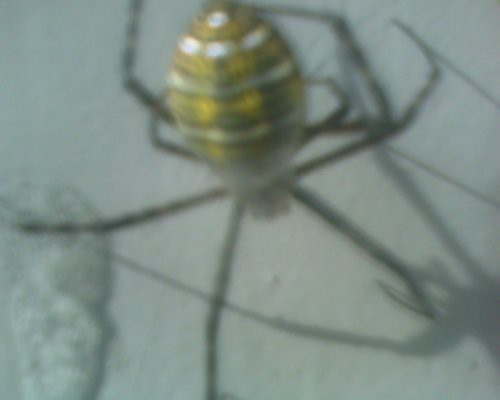 spider10-2010rs
