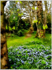 The Clearing (Glenbourne At Home) Tags: wood colour bluebells searchthebest northernireland naturesfinest instantfave flickrsbest coarmagh abigfave anawesomeshot favoritegarden superbmasterpiece beyondexcellence diamondclassphotographer flickrdiamond superhearts softblending ardresshouse clearingwithbluebells