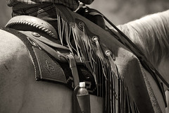 Chaps _9536 (hkoons) Tags: horses horse leather cowboy farm country rodeo cowgirl chaps