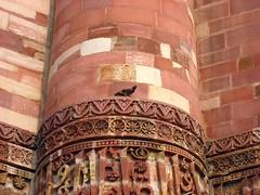 Mynah (ngupta) Tags: india delhi qutub minar