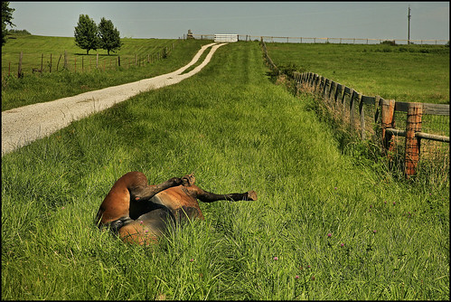 Image of dead horse.