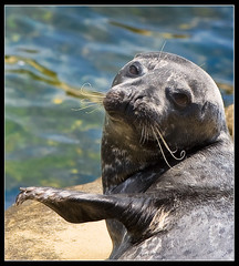 No pictures please.....ok maybe one. (James_Jackson) Tags: sandiego seal