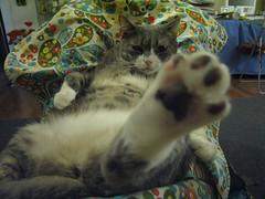 paw on your face! (prattpumpkin) Tags: cat paw fat tabby gray lola belly