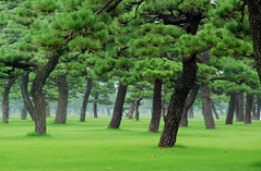 Big bonsai forest (Jean-Franois Chnier) Tags: trees mist green japan misty tokyo explore   imperialpalace japon 4seasons wowiekazowie mcsvisit jfcpix