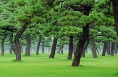 Big bonsai forest - by Jean-François Chénier