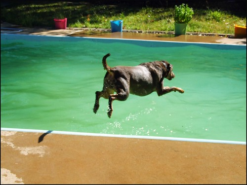 Emerald Dog Dive.