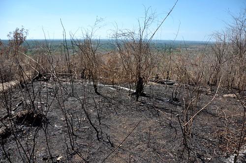 Tala y quema de arboles en El Higuero