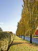 Columbia Way Trees1 (tgstewart1) Tags: autumn trees color fall vancouverwa columbiaway thegalleryoffinephotography