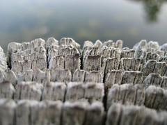 Log by Water (mozartianatsom) Tags: wood macro nature water log dof depthoffield coolest isawyoufirst ysplix
