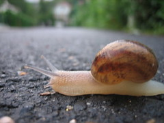 snail - by llamacafecom