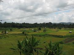 IMG_1500 (jxbfr) Tags: bali ricefields tanahlot balisunsets