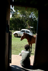 Meditação (gisax) Tags: horse francisco interior pedro sp porta cavalo são fazenda potrinho arapeí
