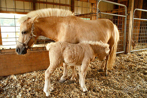 Babe the Horse and her Baby