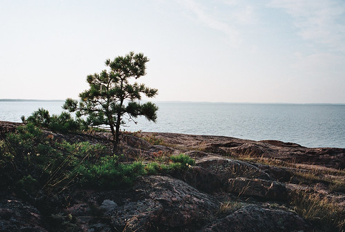 Åland rocks and pines