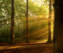 Your golden light... (Jos Mecklenfeld) Tags: light jos sunray mecklenfeld
