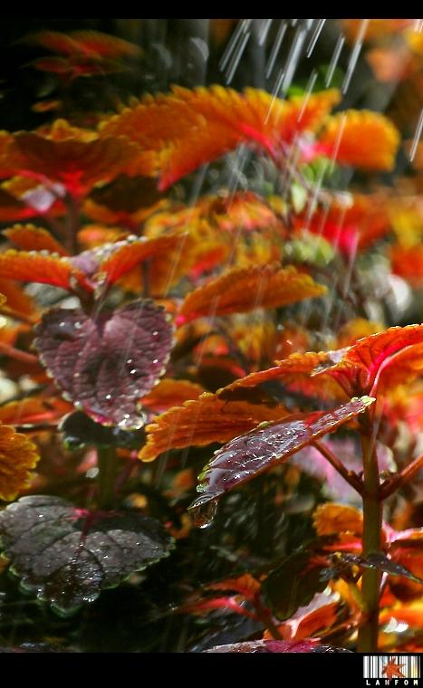 光影。秋色