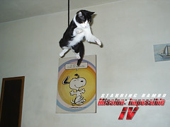 Mission: Impossible IV (L.Lukatsky) Tags: cute sports beautiful cat movie poster kitten ninja secret 4 kitty rope tuxedo gato snoopy impossvel mission agent iv rambo starring rapel impossible misso dazzlingshots