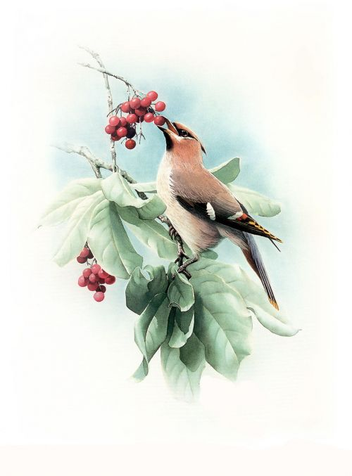 1474340775 401811295a o - cute bird paintings