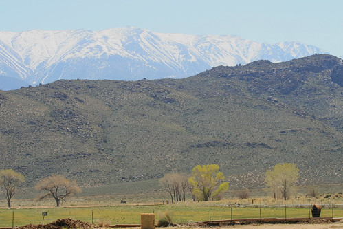 buffalo and mountains