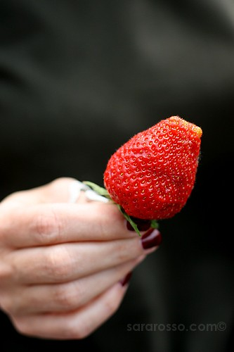 Close-up of a strawberry - Sagra della Fragola, Strawberry Festival in Italy