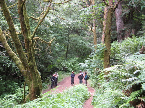 Pausing on the Purisima Creek Trail