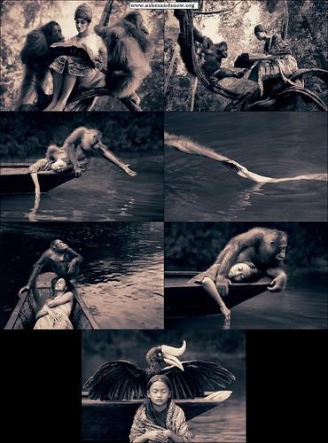 www.ashesandsnow.org_bestiary_borneo_orang-utan_hornbill