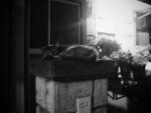 「今日の猫」最終回間近?