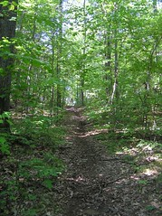 trail through Wildwoods land trust